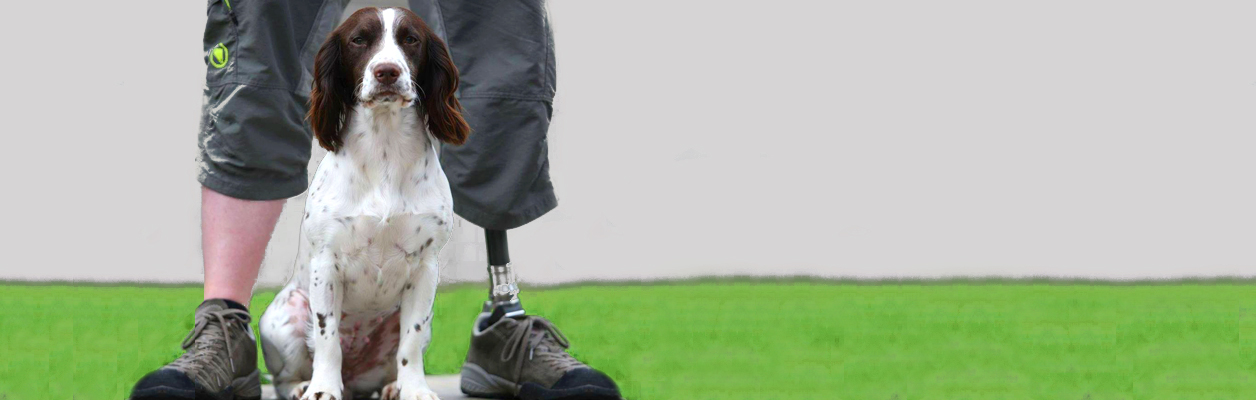 Spaniel dog sat between legs of a man with one prosthetic ankle and foot