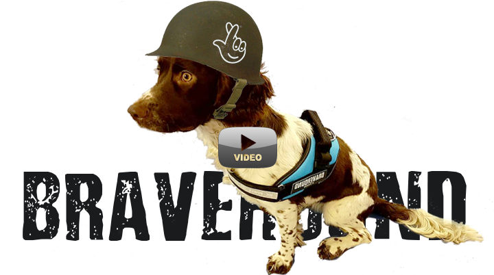 Spaniel dog wearing army helmet with national lottery logo - link to BBC National Lottery Awards interview