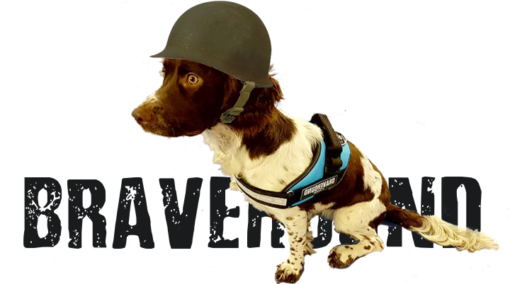 dog wearing army helmet and Bravehound harness