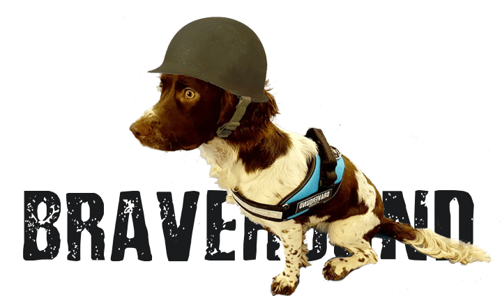 dog wearing army helmet and Bravehound harness