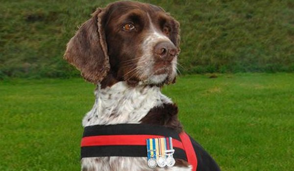 dog with medals