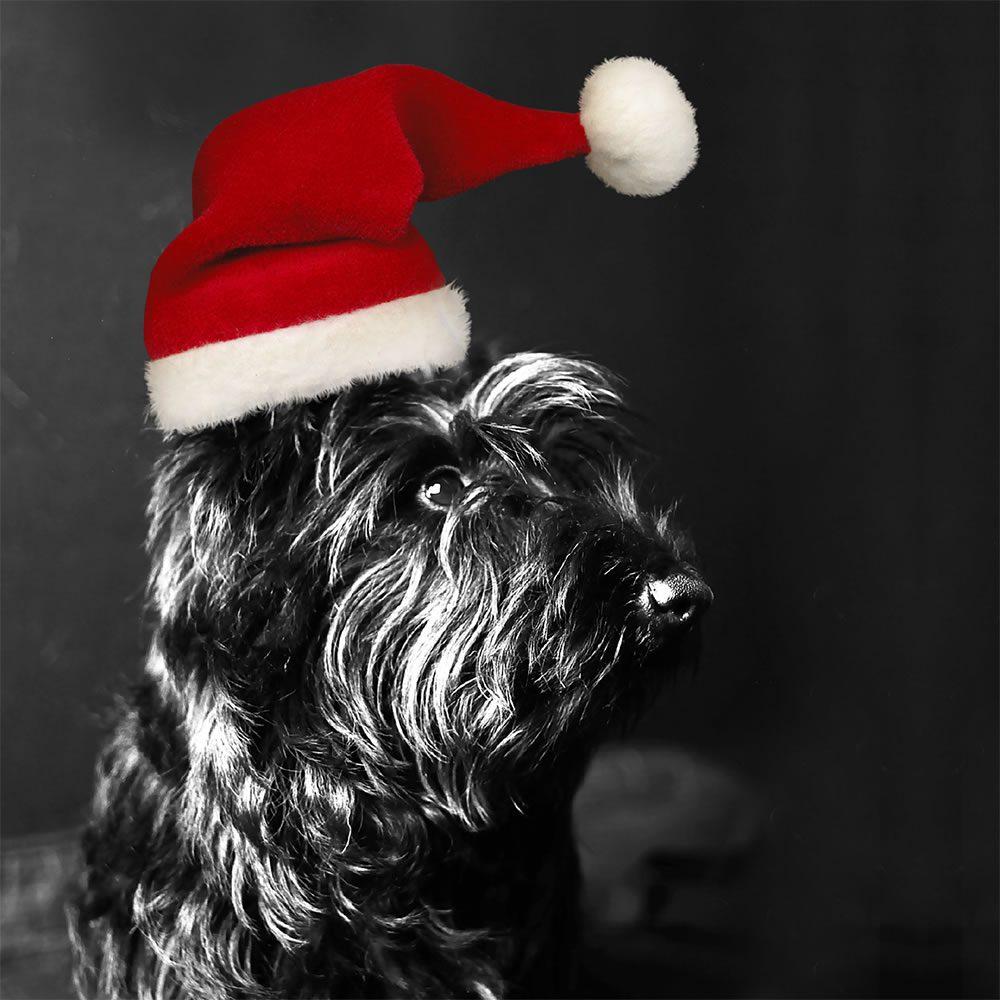 Bravehound christmas card
