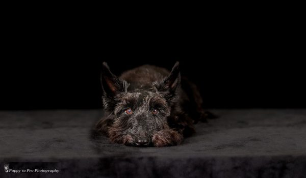 puppy bravehound